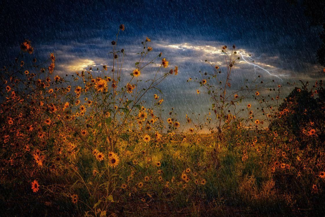 Фото бесплатно поле, цветы, дождь, шторм, молния, пейзаж, пейзажи