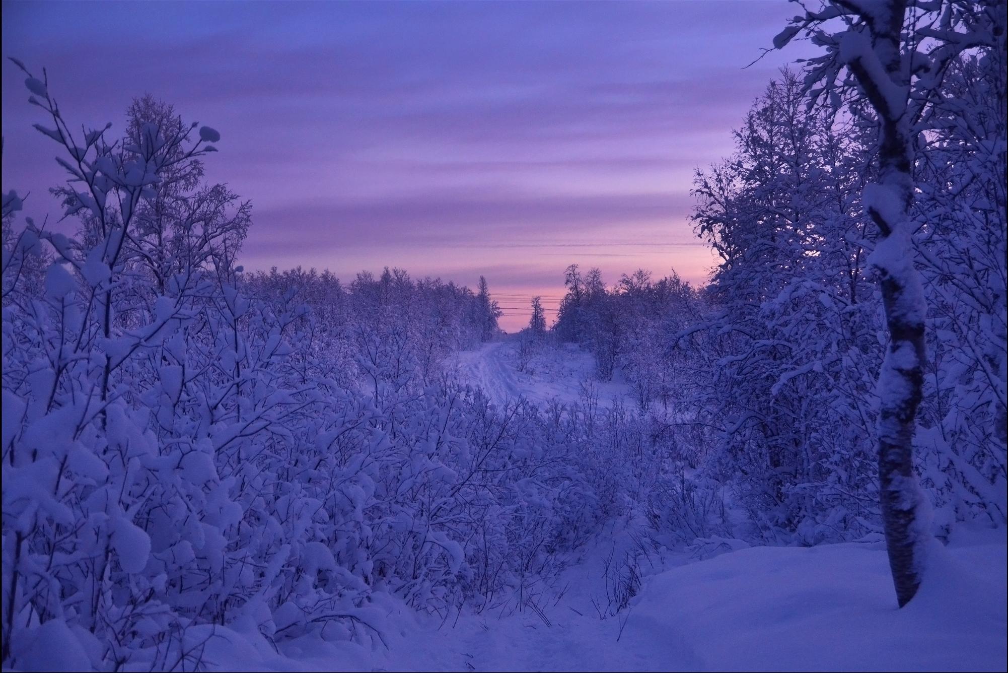 обои закат, снег, деревья, дорога картинки фото