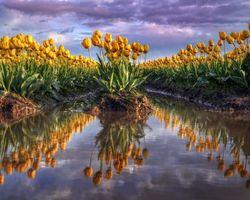 Фото бесплатно поле, лужа, цветы