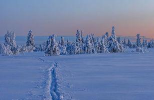 Бесплатные фото зима,снег,сугробы,деревья,пейзаж,закат