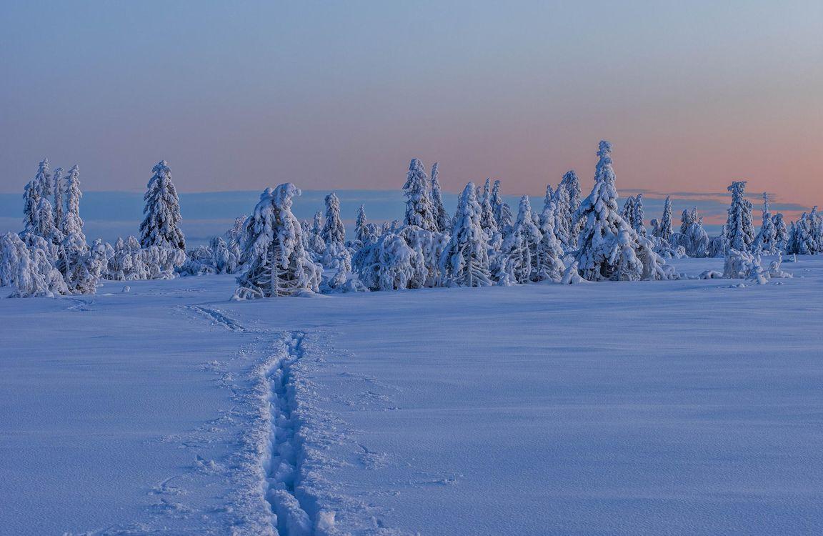 Фото бесплатно зима, снег, сугробы, деревья, пейзаж, закат, пейзажи