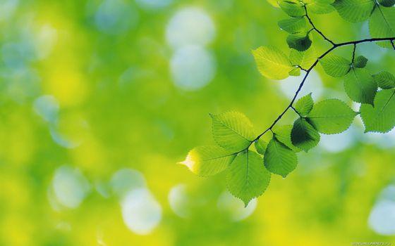 Фото бесплатно зеленый, полосы, дерево