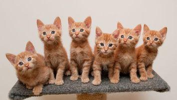 Фото бесплатно котята, рыжие, морды