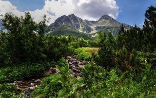 Бесплатные фото ручей,камни,трава,кустарник,деревья,горы,небо