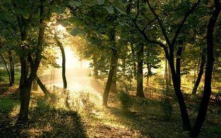 Бесплатные фото трава,деревья,листва,солнце,лучи
