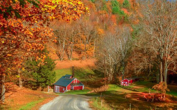Бесплатные фото Вермонт,Осень,Брук-Фарм,осень,дорога,дома,деревья,пейзаж