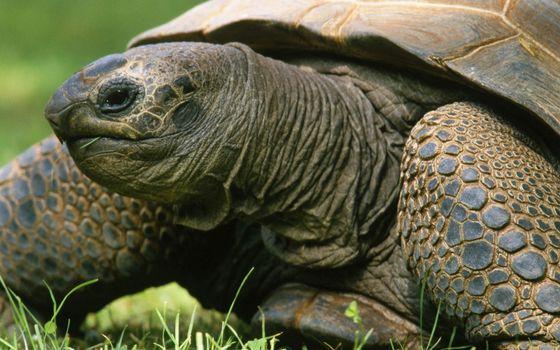 Фото бесплатно черепаха, морда, лапы