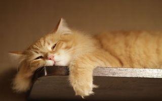 Фото бесплатно кот, рыжий, лежит