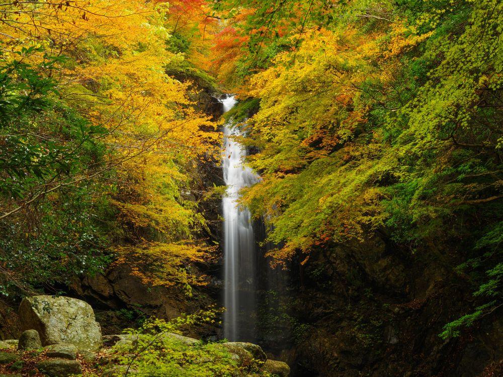Обои осень, лес, деревья, скалы, водопад, природа на телефон | картинки природа - скачать