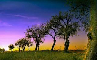 Фото бесплатно листва, кроны, ветки