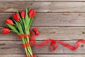 Фото бесплатно цветы, тюльпаны, флора