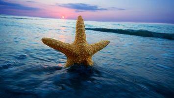 Фото бесплатно море, звезда морская, желтая