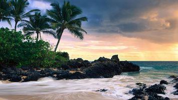Бесплатные фото тропики,кустарник,пальмы,камни,берег,море,волны