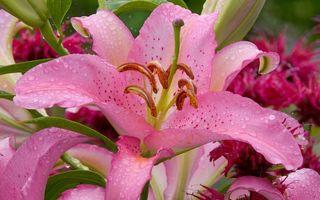 Бесплатные фото цветы,лепестки,розовые,пестики,тычинки,стебли,листья