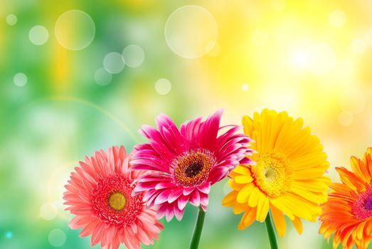 Фото бесплатно цветы, флора, герберы