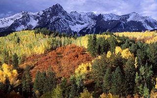 Бесплатные фото осень,лес,деревья,листва,цветная,горы,снег