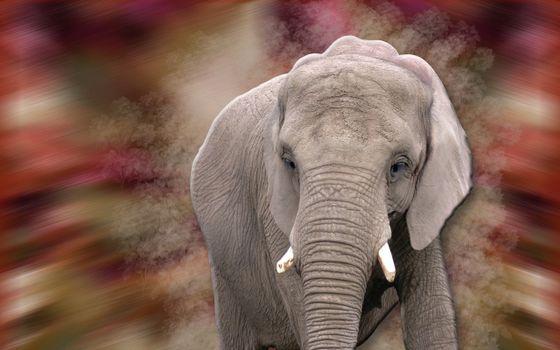 Photo free trunk, background blurred, ears