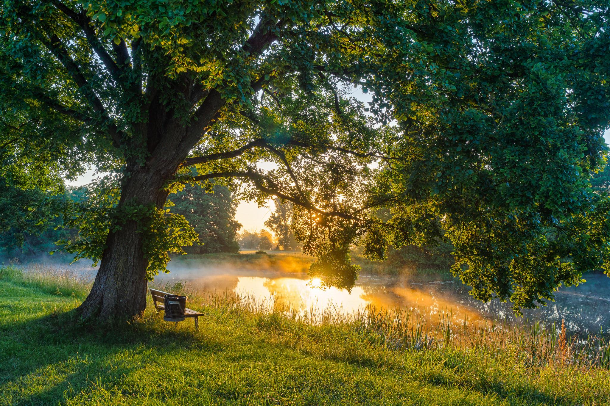 природа река солнце деревья  № 198644  скачать