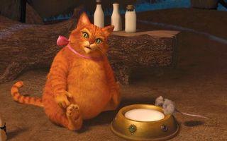 Фото бесплатно шрек, кот, толстый