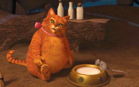 Бесплатные фото шрек,кот,толстый,миска,молоко,мышь