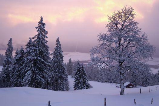 Фото бесплатно Утро, Зима, Невшатель