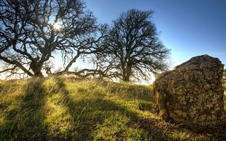 Фото бесплатно холм, трава, камень, валун, деревья, небо, солнце