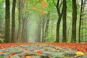Заставки осень,лес,деревья,дорога,пейзаж