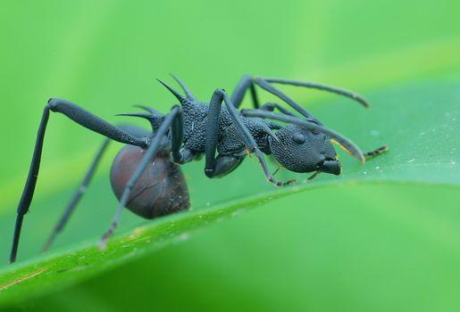 Скачать заставку муравей, макро