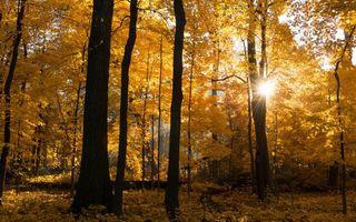Бесплатные фото осень,лес,деревья,листва,желная,солнце,лучи