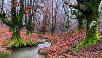 Фото бесплатно Otzarreta, Испания, речка