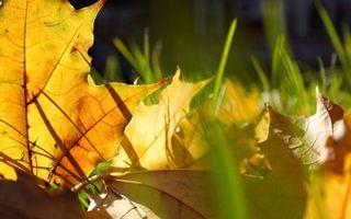 Бесплатные фото природа,трава,зеленая,листья,сухие,желтые,прожилки