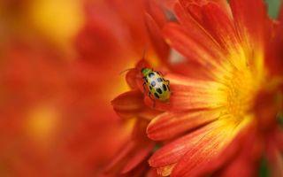 Фото бесплатно цветок, жук, пыльца