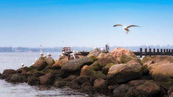 Обои Германия, пейзаж, Скалы, Шлезвиг-Гольштейн, Делавэр, камни, море, чайки