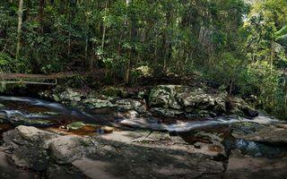 Бесплатные фото река,течение,камни,мостик,лес,заросли