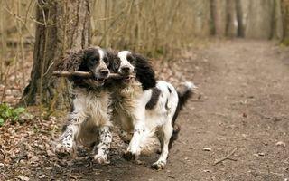 Бесплатные фото собаки,палка,лес,дорожка,играют