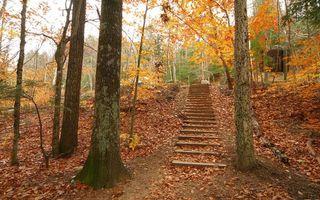 Бесплатные фото осень,горы,лес,деревья,лестница,листва
