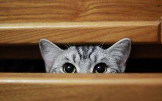 Заставки кошка, морда, глаза