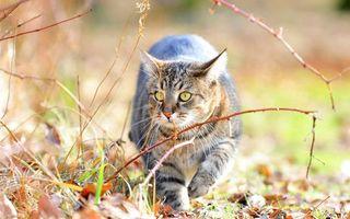 Бесплатные фото кот,походка,трава,осень