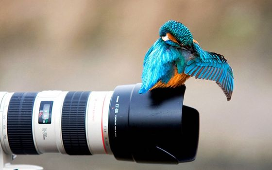 Photo free bird on the lens, camera, situation