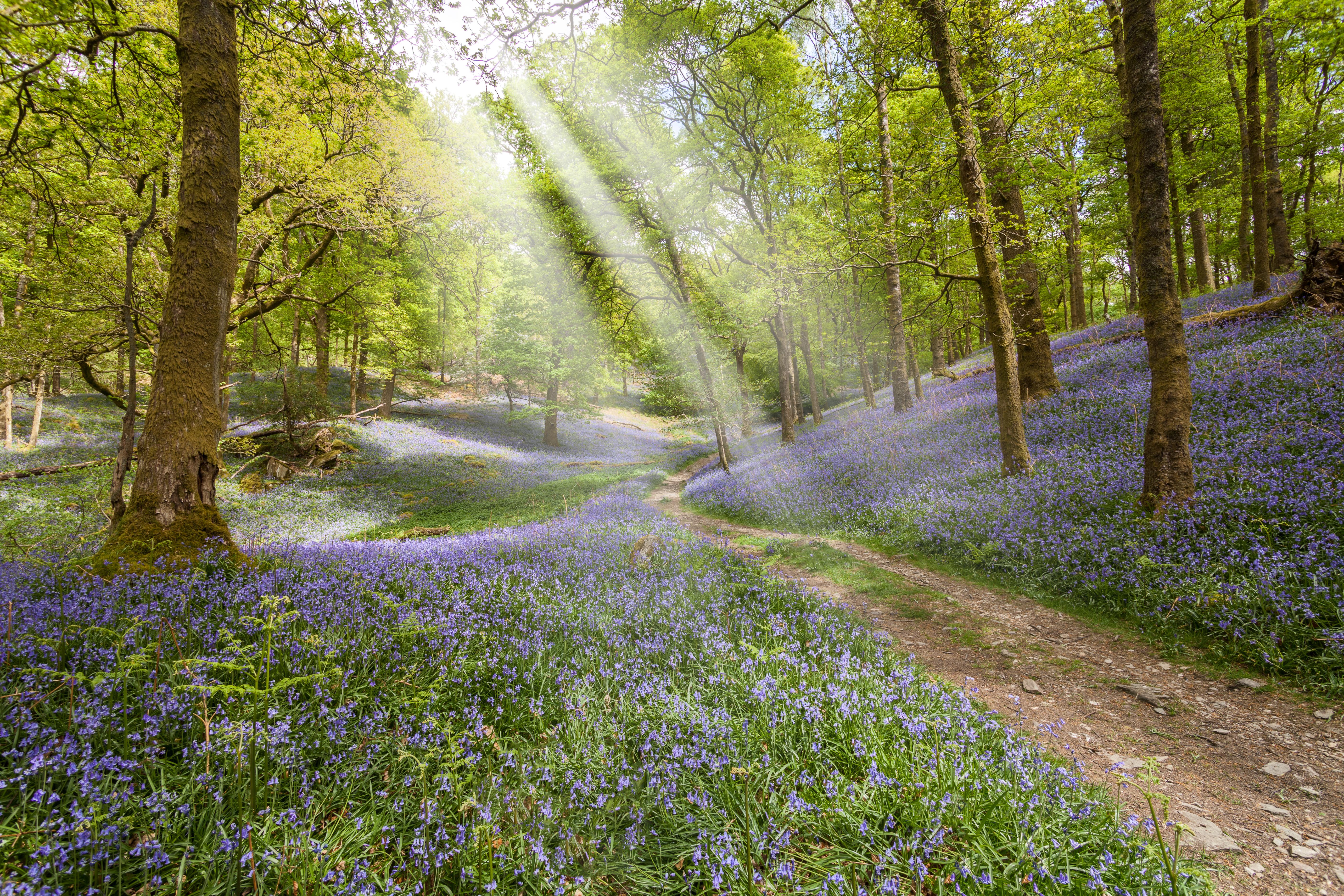 обои лес, деревья, дорога, цветы картинки фото