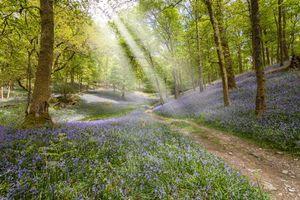 Бесплатные фото лес,деревья,дорога,цветы,лучи солнца,природа
