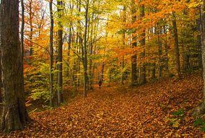 Бесплатные фото осень,лес,деревья,природа,пейзаж