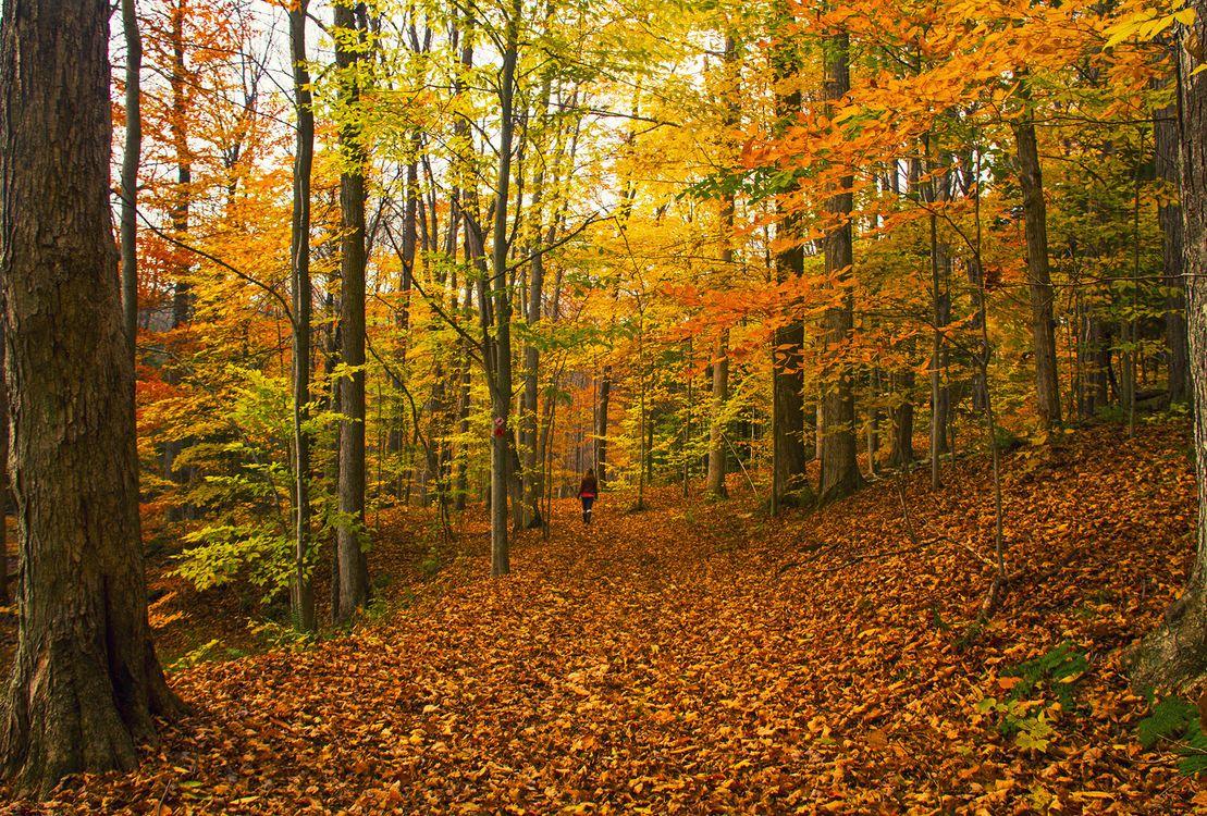 Фото бесплатно осень, лес, деревья, природа, пейзаж, природа