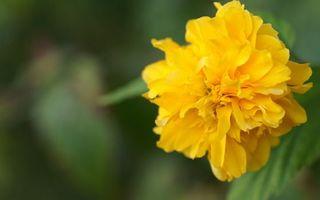 Бесплатные фото цветок,лепестки,желтые,листья,зеленые,фон мутный