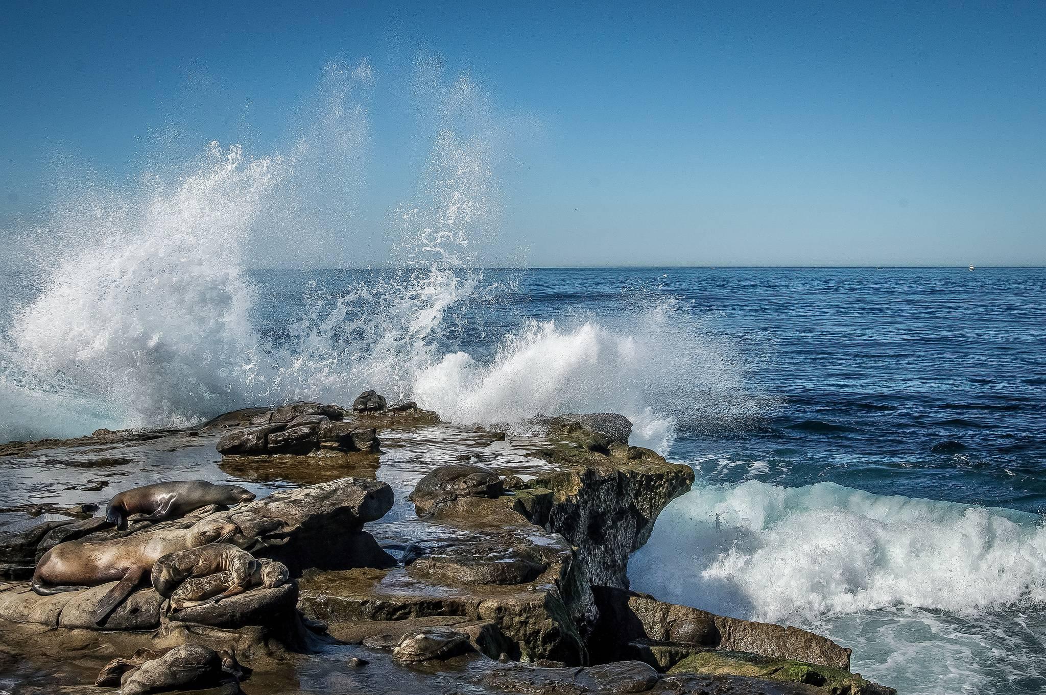 La Jolla, California, море