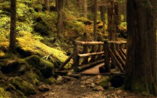 Photo free bridge, moss, stones