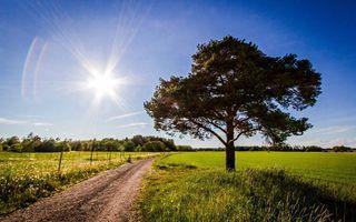 Фото бесплатно поля, всходы, трава, дорога, ограждение, деревья, кустарник, небо, солнце