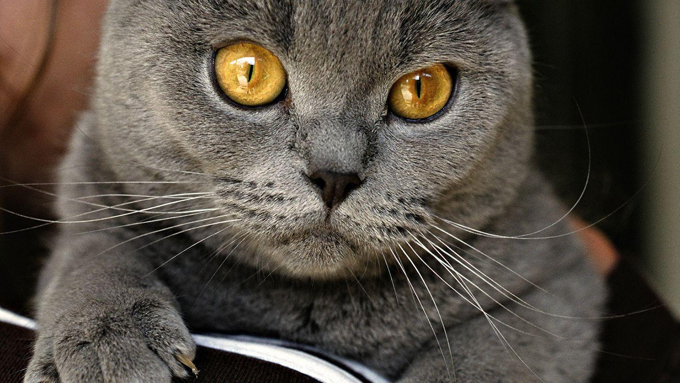 Кот с желтыми глазами · бесплатное фото