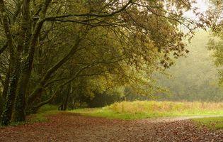 Фото бесплатно лес, деревья, поляна, дорога, пейзаж