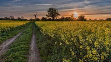 Бесплатные фото закат, поле, дорога, цветы, деревья, пейзаж